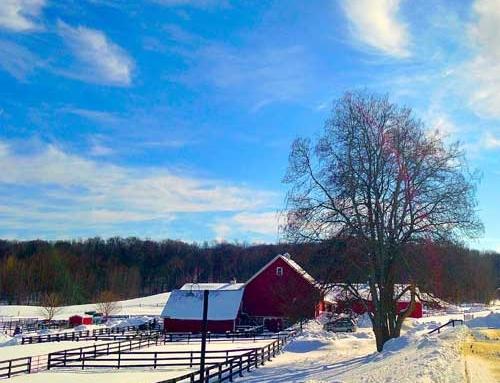 December Contest #2: Winter Wonderland