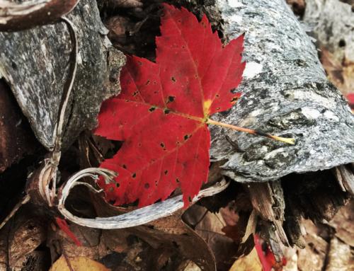 A Fall Guide to Leelanau