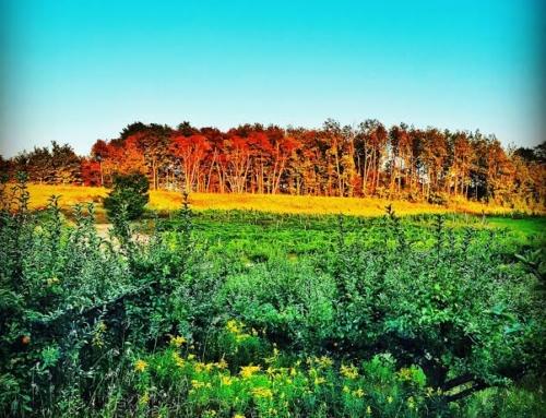 Project 24: Good Neighbor Organic Vineyards & Winery