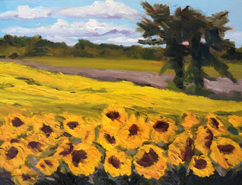 Sunflower Fields Ablaze