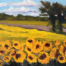 Sunflower Fields Ablaze - Painting by Stephanie Schlatter