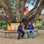 Tree near Puerto Vallarta