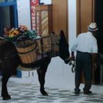 Flower Delivery in Mykonos